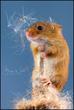 mouse2 (3).jpg
