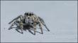 spider2120920.jpg