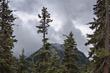 Cascade Trees 6678.jpg