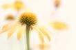 Yellow Flower 0598.jpg