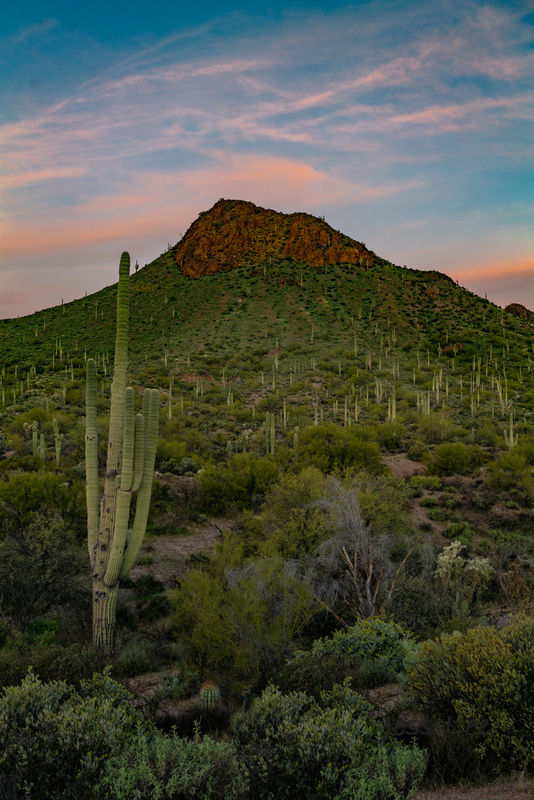 Apache-junction_JLE0014(1).jpg :: Saguaro morning limitied edition photograph for sale