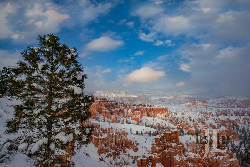 Bryce  Winter Snow-0589.jpg :: Red Reocks and hoodos Utah photo