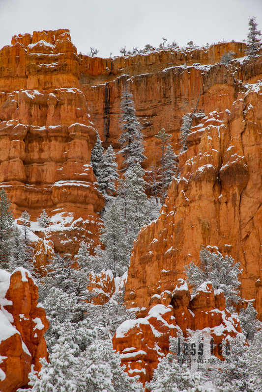 Bryce  Winter Snow-9750.jpg