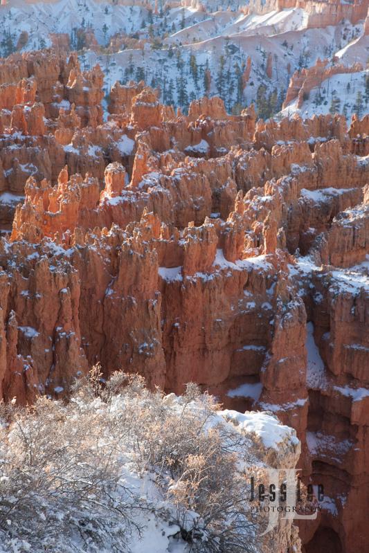 Bryce  Winter Snow-9959.jpg