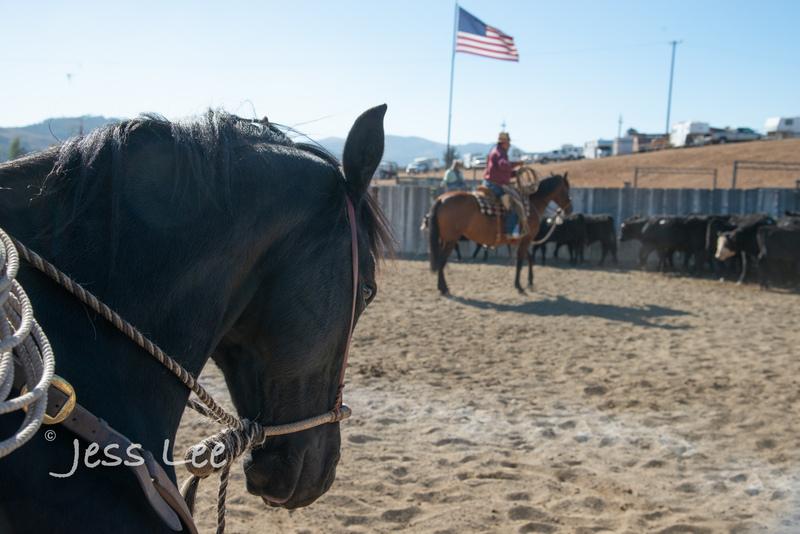 Californio-vaquaro-photos-7782(1).jpg :: Cowboys carring on the traditions of the Vaquero, Californios, Buckaroo ways.