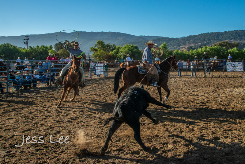 Californio-vaquaro-photos-7957(1).jpg :: Cowboys carring on the traditions of the Vaquero, Californios, Buckaroo ways.