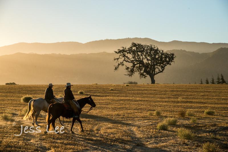 Californio-vaquaro-photos-8034(1).jpg :: Cowboys carring on the traditions of the Vaquero, Californios, Buckaroo ways.