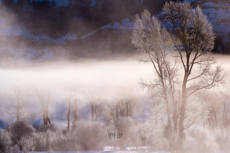 Frosty-tree-1660.jpg