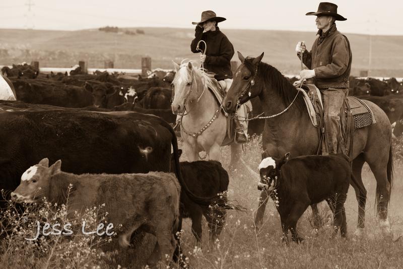 Idaho-Cowboyl-photos-0925.jpg