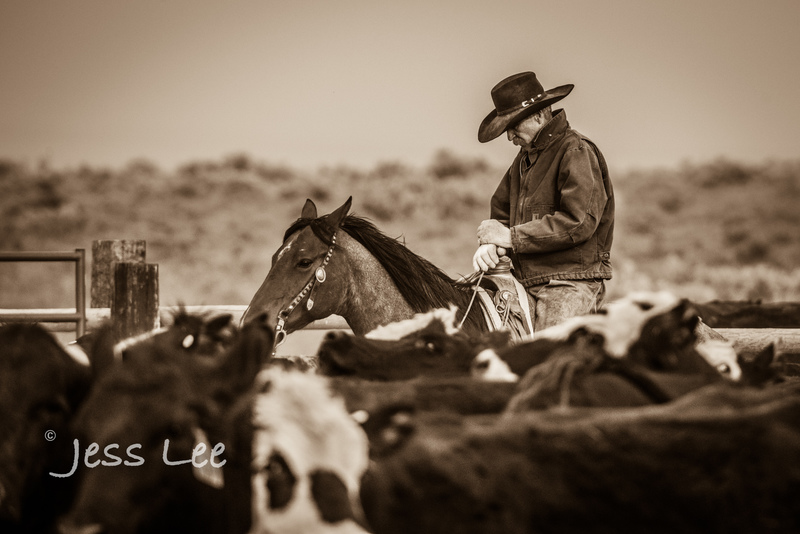 Idaho-Cowboyl-photos-0947.jpg