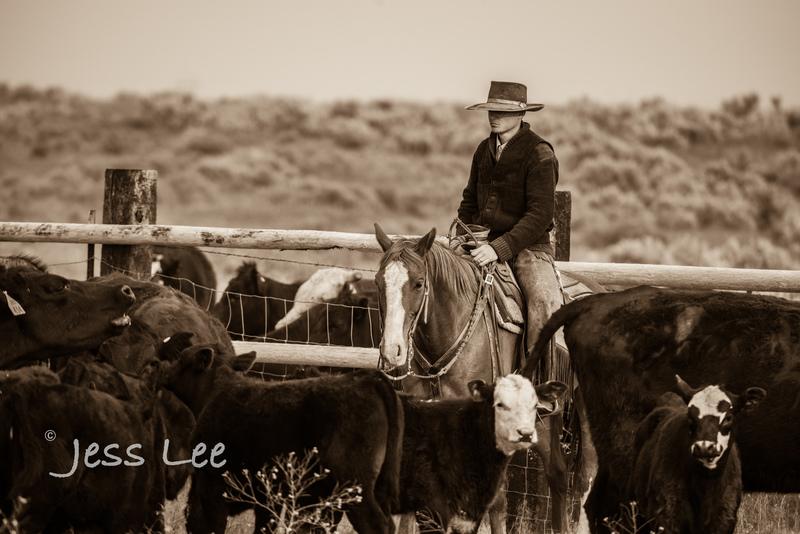 Idaho-Cowboyl-photos-0952(1).jpg