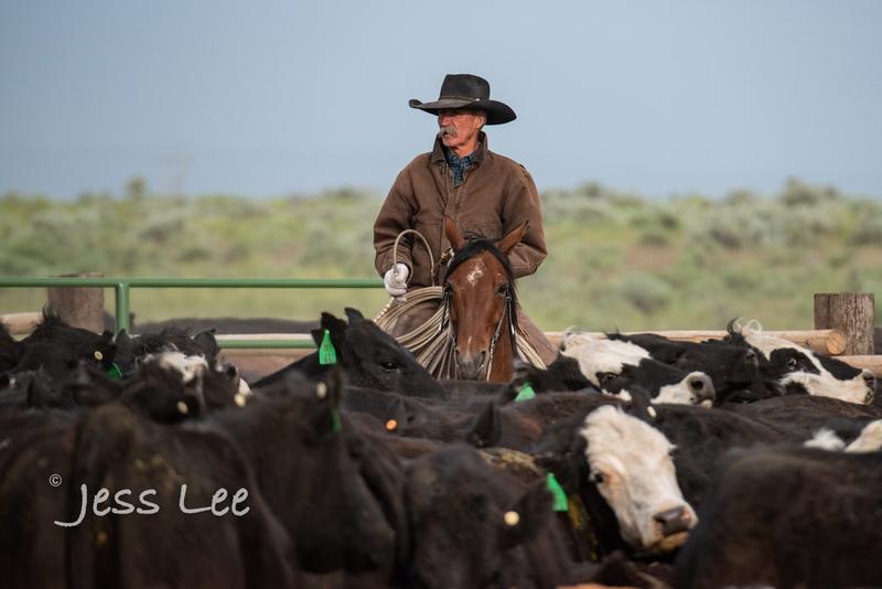 Idaho-Cowboyl-photos-0960(1).jpg