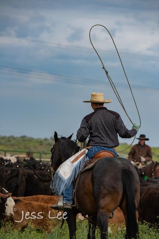 Idaho-Cowboyl-photos-0979(1).jpg