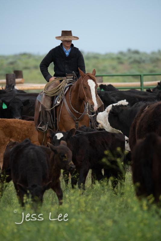 Idaho-Cowboyl-photos-1001(1).jpg