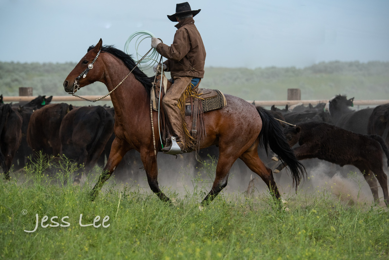 Idaho-Cowboyl-photos-1105.jpg