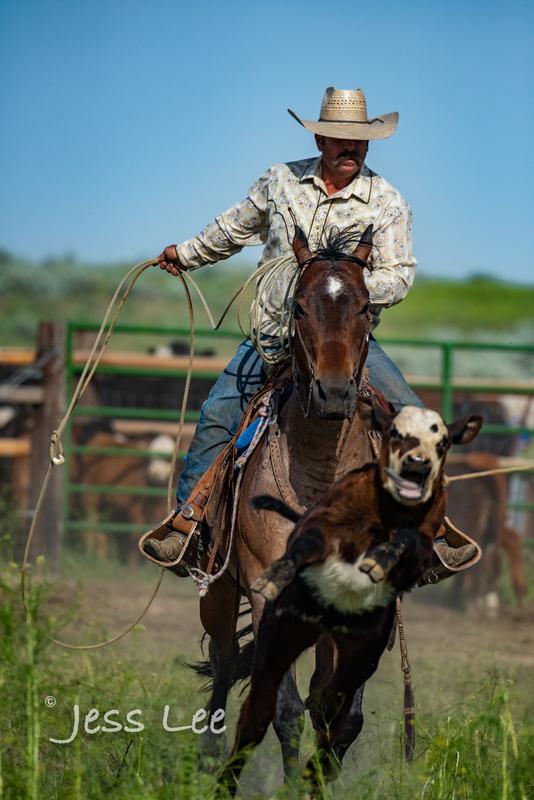Idaho-Cowboyl-photos-1215.jpg
