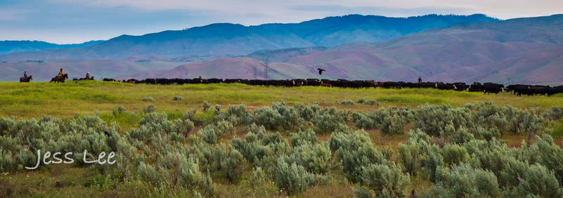 Idaho-Cowboyl-photos-2040(1).jpg