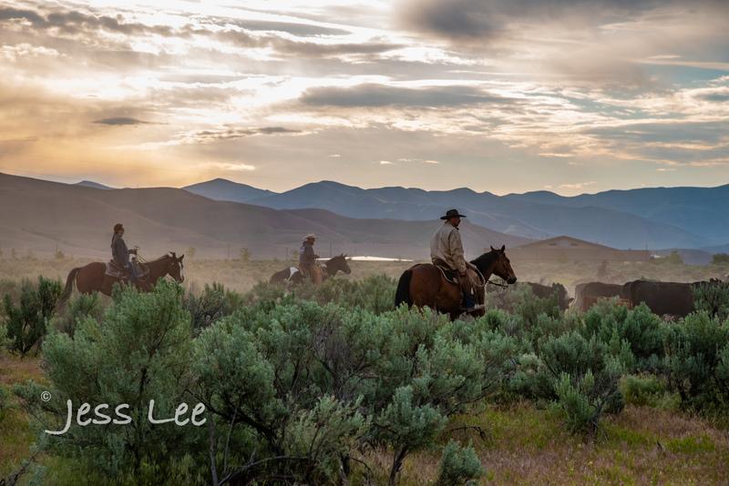 Idaho-Cowboyl-photos-2044.jpg
