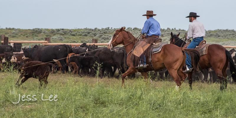 Idaho-Cowboyl-photos-2183.jpg