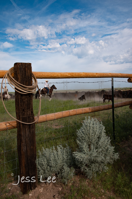 Idaho-Cowboyl-photos-2241.jpg