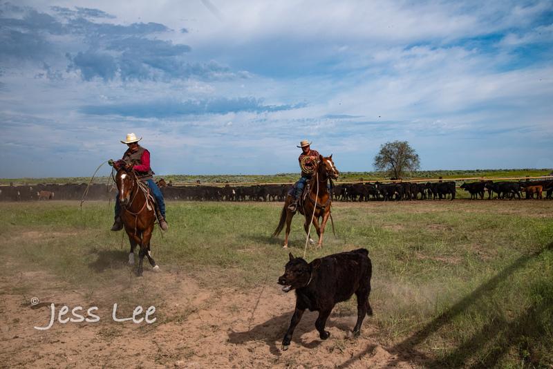 Idaho-Cowboyl-photos-2325(1).jpg