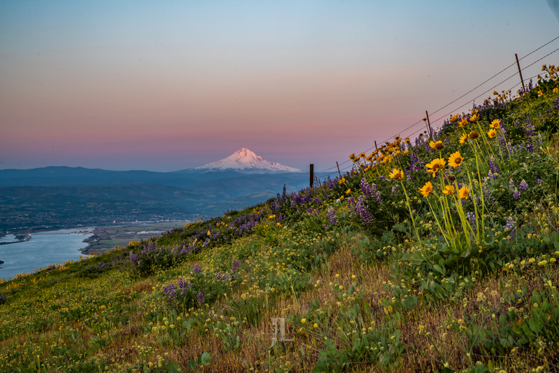 Mt-Hood-Spring_JRL2510(1).jpg :: Spring time flowers and mout hood with the Columbia River.