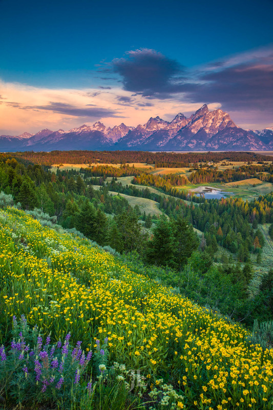 Teton-spring_LEE8769.jpg :: Teton range with spring flowers in Grand Teton National park.