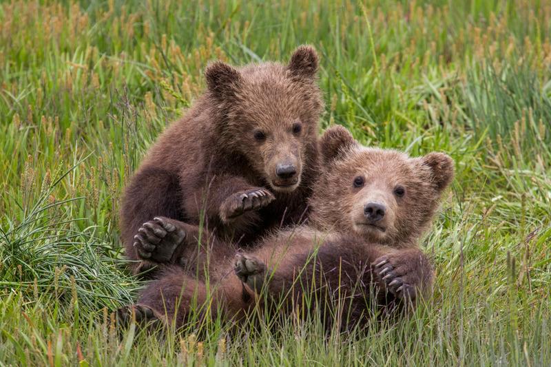 _EE42226-1.jpg :: Alaska_Bear Photo