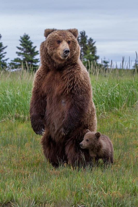 _EE42446.jpg :: Alaska_Bear Photo