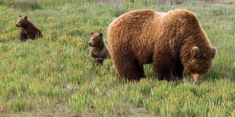 _EE42642.jpg :: Alaska_Bear Photo