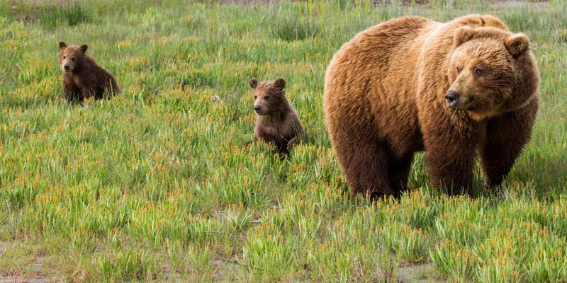_EE42646.jpg :: Alaska_Bear Photo