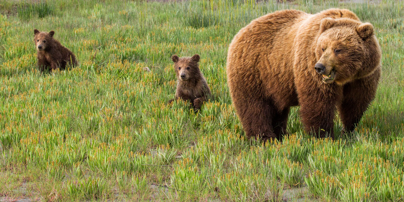 _EE42647.jpg :: Alaska_Bear Photo