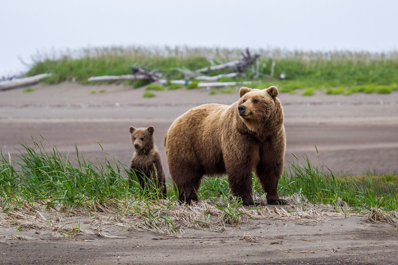 _EE49540.jpg :: Alaska_Bear Photo