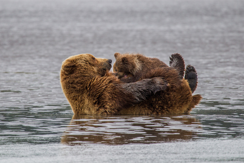 _EE49630.jpg :: Alaska_Bear Photo
