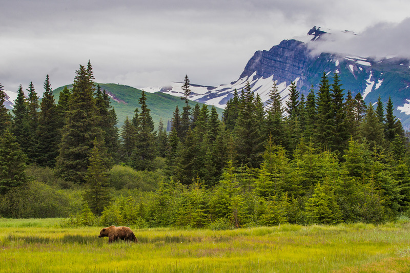 _EE49747.jpg :: Alaska_Bear Photo