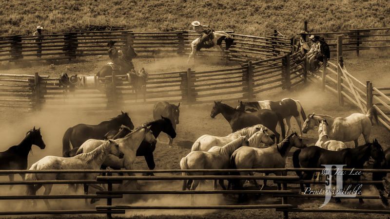 _JLP6979-Edit(2).jpg :: Cowboy photos from Jess Lee Photo Workshops for cowboys and wild horses available for Stock, Prints, Fine Art. Mustangs from Utah, Wyoming, Oregon, Idaho, Colorado, Arizona, Wyoming, Montana.