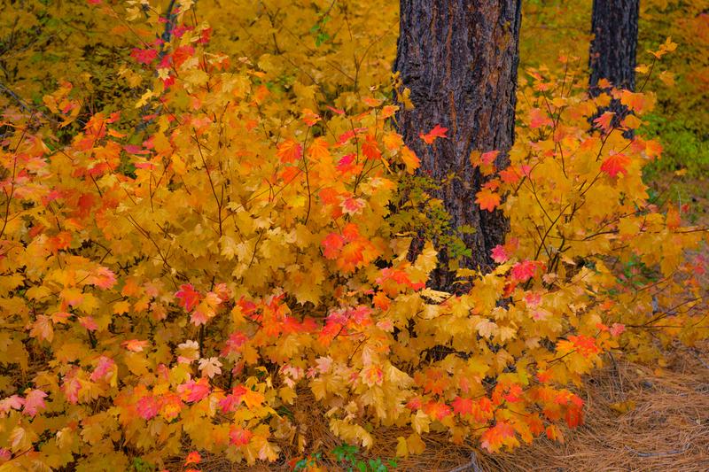 _JLZ9715(1).jpg :: Autumn Limited Edition Fine Art Photo Print