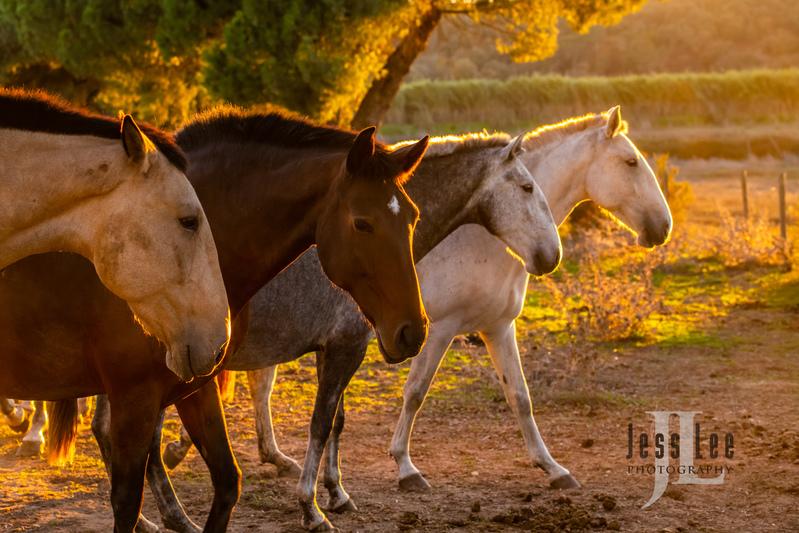 _JRL4275(1).jpg :: Photos of Portugal, horses, Lisbon, Sintra, Golega, and the culture