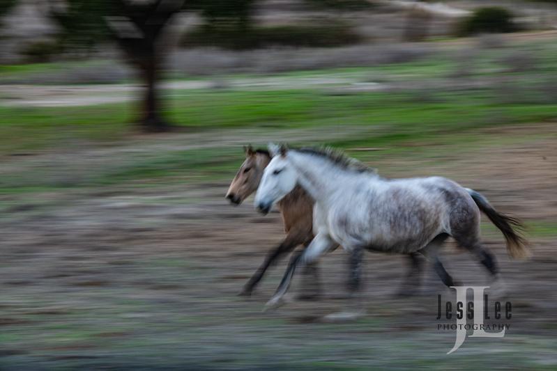 _JRL4331(1).jpg :: Photos of Portugal, horses, Lisbon, Sintra, Golega, and the culture
