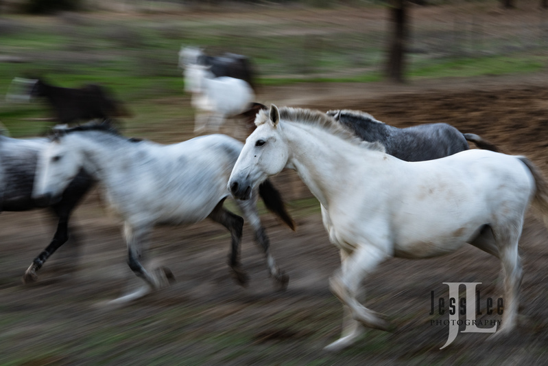 _JRL4349(1).jpg :: Photos of Portugal, horses, Lisbon, Sintra, Golega, and the culture