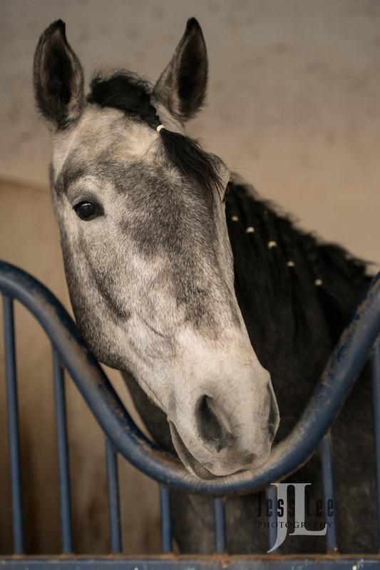 _JRL5875-2(1).jpg :: Photos of Portugal, horses, Lisbon, Sintra, Golega, and the culture
