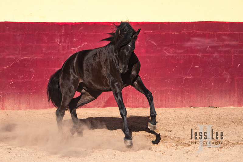 _JRL5937-Edit(1).jpg :: Photos of Portugal, horses, Lisbon, Sintra, Golega, and the culture
