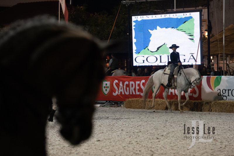 _LEE0536(1).jpg :: Photos of Portugal, horses, Lisbon, Sintra, Golega, and the culture