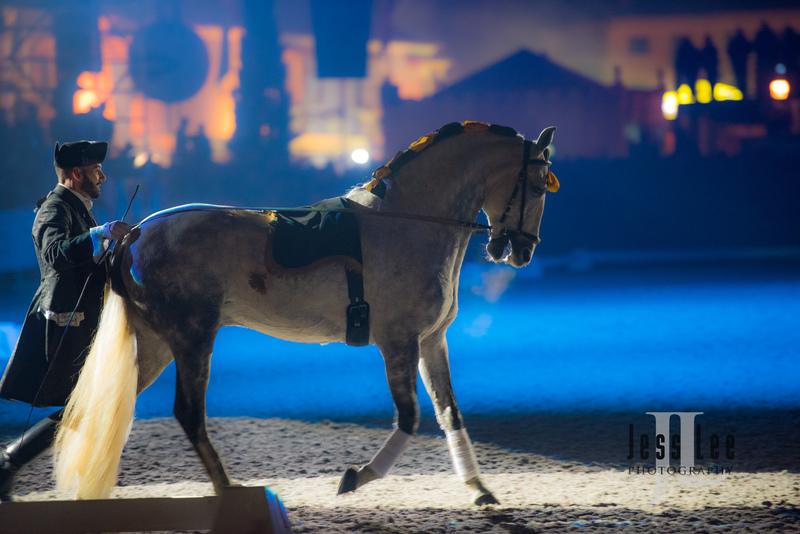 _LEE0681(1).jpg :: Photos of Portugal, horses, Lisbon, Sintra, Golega, and the culture