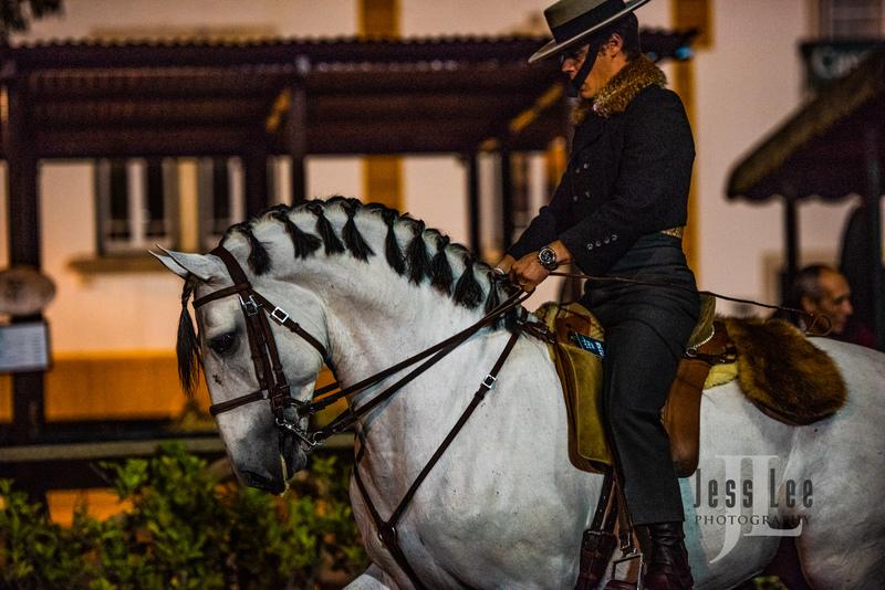 _LEE1459(1).jpg :: Photos of Portugal, horses, Lisbon, Sintra, Golega, and the culture