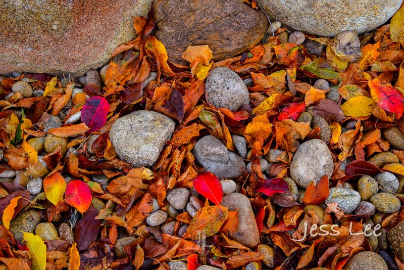 _LEE4153(1).jpg :: Autumn Limited Edition Fine Art Photo Print