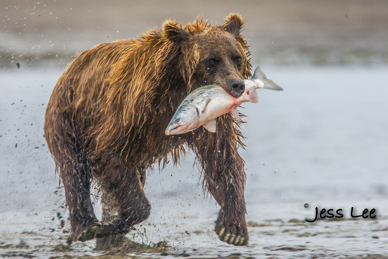 bearcatch-8366b.jpg