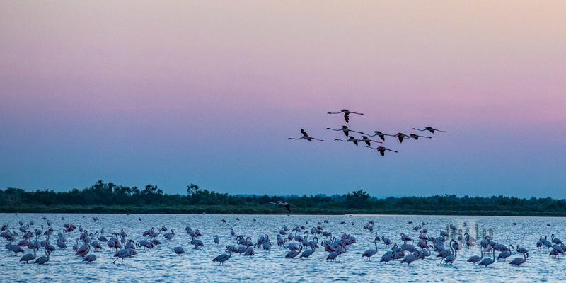 birds21-0999.jpg