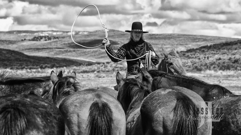 cowboy--224-2(1).jpg :: old time cowboy roping horses