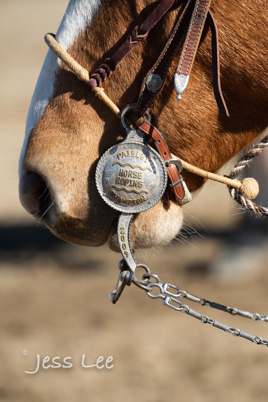 cowboy-gear-photos-1470(1).jpg :: Photos of the Equiptment Cowboy use in their work. Saddles, Spurs. Bits. ropes, cuffs, guns, photosgraphy
